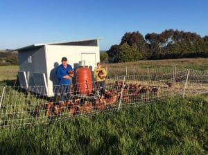 Peter Rosemary with chooks -