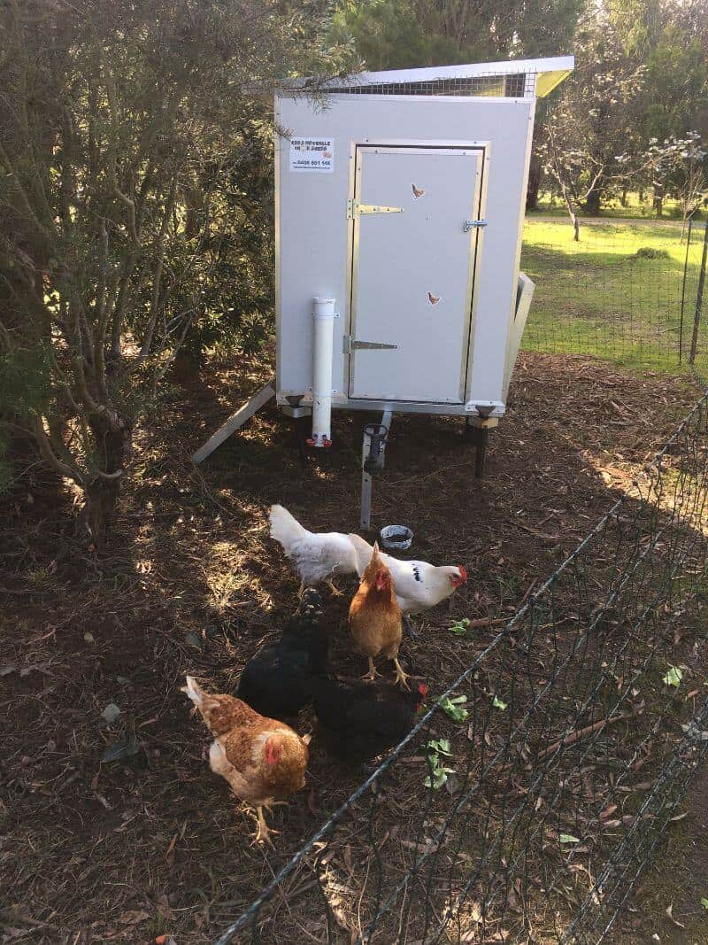 Testimonial images from Chris and Emily for a 15 bird chook shed