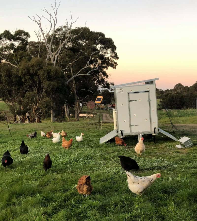30 bird moveable chook shed Victoria