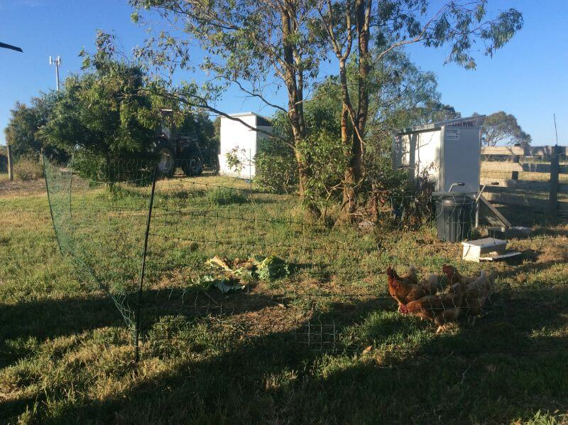 Electric poultry netting Victoria