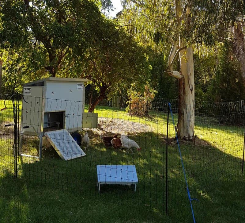 Susie and Shane's 8 bird moveable chook shed